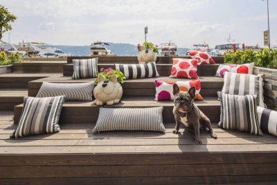 arnavutköyde bir köpek cafesi