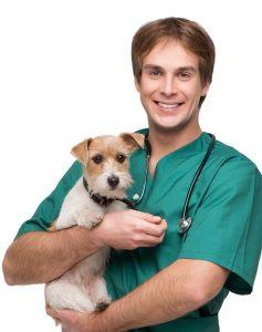 pet bakımı