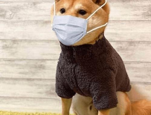 Korona Hastalığı ve Evcil Hayvanlar